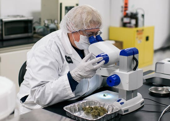 Cannabis Testing Laboratory Functions & the Industries it Serves