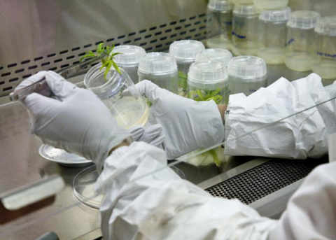 The Key Points of Starting a Cannabis Testing Laboratory